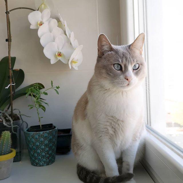 gata1.jpg #cats_of_instagram