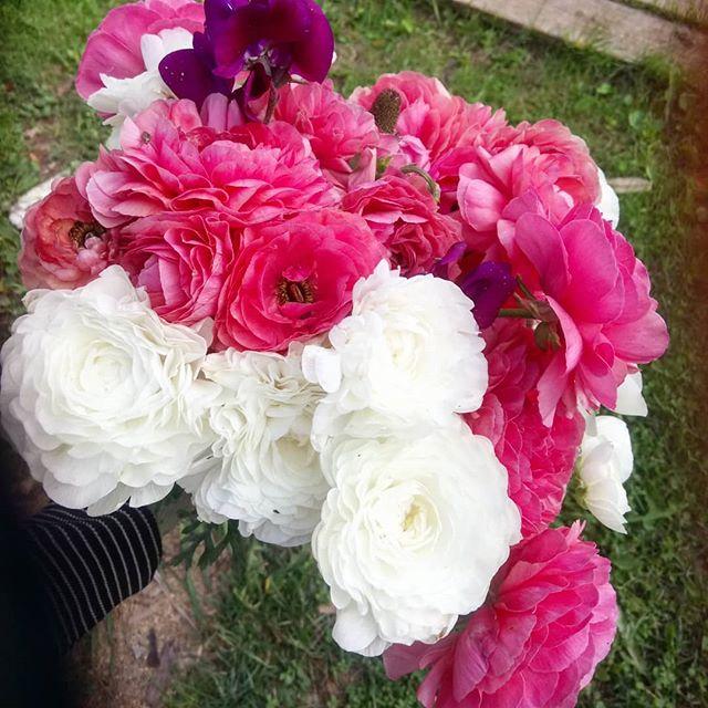 Букет с огорода #цветы#раннункулюс