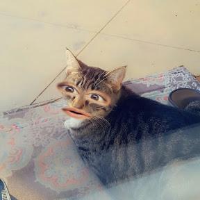 Krazy for Cats Kk