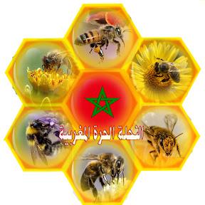 النحلة الحرة المغربية