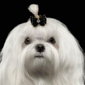 Dog Trender