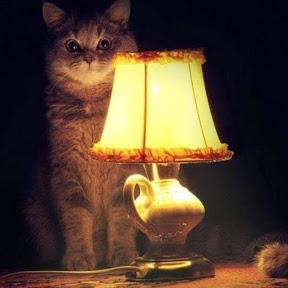 Ламповая комната
