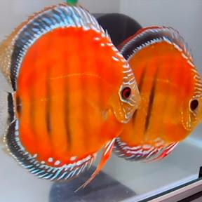 FISH TUTORIAL