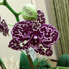 Уютные орхидеи и не только