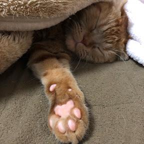 ネコ癒し動画