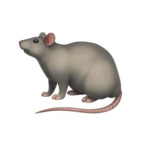 крыса года