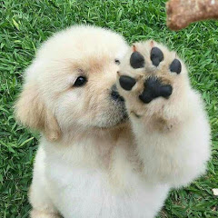 Awesome Paws9