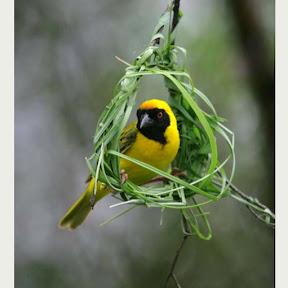 นกน้อย ทํารังแค่พอตัว
