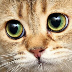 Милые котики от Котэлло!
