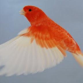 Aviario Raya Pino