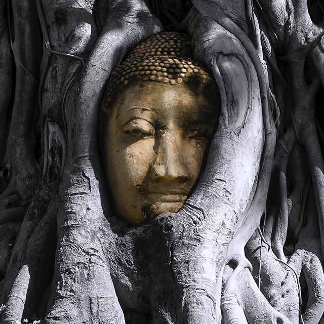 Buddha head entwined within the roots of a banyan tree. Wat Mahathat, Ayutthaya, Thailand.  #BW #photography #wonderful_places #earthpix #ps_illuminate #WHPlayers #earthpix #earth #globe_people #creativeoptic #canon #canonphotography #canonthailand #ig_color #lifeofadventure #creatorsregime #moodygrams #eclectic_shotz #streets_vision #thediscoverer #tourtheplanet #depthsofearth #outplanetdaily #earthoutdoors #ourlonelyplanet #voyaged #thailand