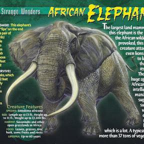 Ryan Dujumbo Mamutuse Elephant Tmnt