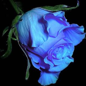 الحب الورودFantasy