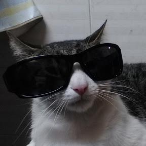 Gato Mafia