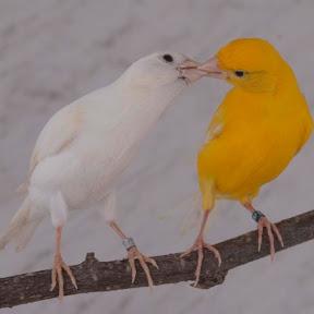الطائر