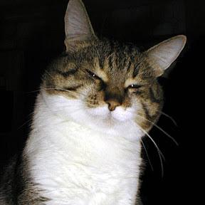 Catcatcat electronics
