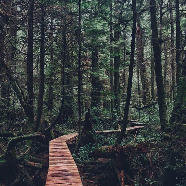 Como essa foto faz vocês se sentirem? Olhando para ela eu me sinto como se estivesse num lugar mágico, de natureza exuberante, onde o silêncio reina! E foi assim que me senti fazendo essa trilha também. A Rainforest Trail, como é chamada, é uma trilha curta, super fácil, que fica na beira da estrada entre Tofino e Ucluelet (outra cidade de Vancouver Island sobre a qual falarei aqui). Esses posts estão fazendo eu ficar com tanta saudade do Canadá…🍃🍄🍁🌳 ⠀⠀⠀⠀⠀⠀⠀⠀⠀ ⠀⠀⠀⠀⠀⠀⠀⠀⠀ ⠀⠀ ⠀ ⠀ ⠀⠀⠀ ⠀⠀⠀⠀⠀⠀⠀⠀⠀ ⠀⠀⠀⠀⠀⠀⠀⠀⠀ ⠀⠀ ⠀ ⠀ ⠀⠀ ⠀⠀ ⠀⠀ ⠀⠀⠀⠀⠀ ⠀⠀⠀⠀⠀⠀⠀⠀⠀ ⠀⠀⠀⠀⠀⠀⠀⠀⠀ ⠀⠀ ⠀ ⠀ ⠀⠀⠀ ⠀⠀⠀⠀⠀⠀⠀⠀⠀ ⠀⠀⠀⠀⠀⠀⠀ ⠀⠀⠀⠀⠀⠀⠀⠀⠀ ⠀⠀⠀⠀⠀⠀⠀⠀⠀ How does this photo make you feel? Looking at it, I feel like as if I was at a magical place, surrounded by nature, where silence reigns. And that is exactly how I felt whilst there. The Rainforest Trail is a short trail, with easy access, located at the side of the road between Tofino and Ucluelet (another Vancouver Island city which I will talk about here shortly). These posts are making me miss Canada so much…🍃🍄🍁🌳 ⠀⠀⠀⠀⠀⠀⠀⠀⠀ ⠀⠀⠀⠀⠀⠀⠀⠀⠀ ⠀⠀ ⠀ ⠀ ⠀⠀⠀ ⠀⠀⠀⠀⠀⠀⠀⠀⠀ ⠀⠀⠀⠀⠀⠀⠀⠀⠀ ⠀⠀ ⠀ ⠀ ⠀⠀ ⠀⠀ ⠀⠀ ⠀⠀⠀⠀⠀ #canada #canada_gram #canada_pic #canadaphotography #canadatravel #canadaviews #canadalovers #canadalove #canadalife #explorecanada #canadatrip #bcisbeautiful #dailyviewbc #beautifulbritishcolumbia #barbaratravels #viajeigalera #vancouverisland #vancouverislandbc #vancouverislandguide #vancouverislandlife #vancouverislandtourism #wonderfulvancouverisland #explorevancouverisland #canadianlife #rainforesttrail #rainforesttrailtofino #rainforesttrailbc #tofinobc #tofinotravel #tofinotrails