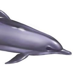 우주돌고래