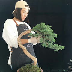 Love Bonsai