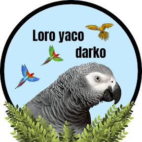 LORO YACO DARKO
