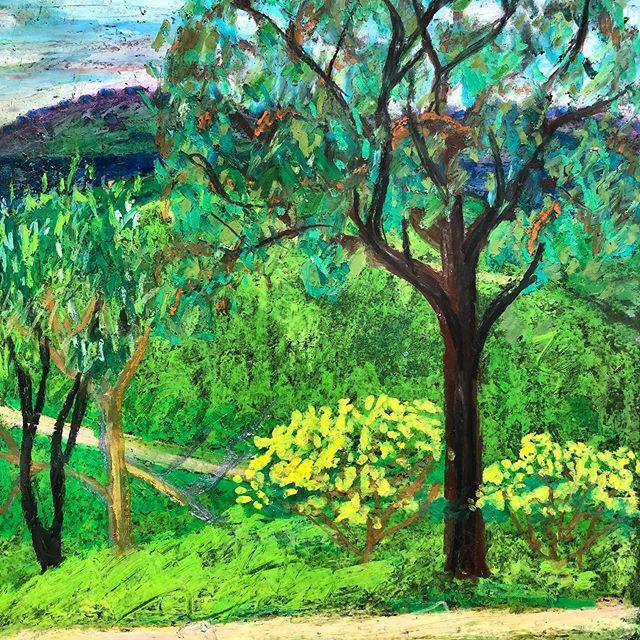 There is a small amount of joy on the range, suck it in while you can.....oil pastel on black paper. #art #artwork #artist#drawing #drawings #illustration #australia #australianart #doodle #pastel #wattle #gumtree #ironbark #oilpastel #landscape #artgallery#instaart#instaartist #eucalyptus #bushart #aussie #straylia