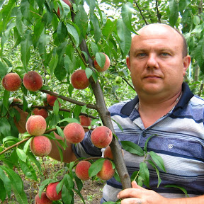 Коллекционер Плодовых