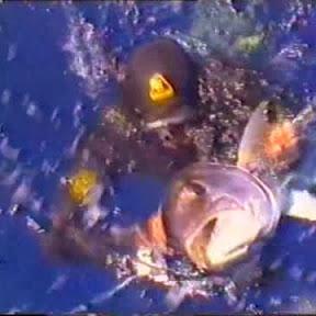 diving63