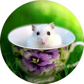 Rat trap Funny