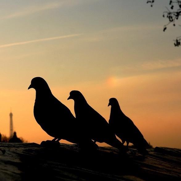«Le principe de l'amitié c'est les 3 C .....Complicité, Confiance, Conneries.» 🦋#igersfrance #igparisiloveyou #igparis #parisjetadore #sunsetlovers #quaideseine #silhouette #goodvibes #amitié #amateurs_shot #hello_paris #seemyparis #pariscity #pariscityvision #mauditspigeons