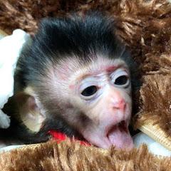 Monkey Baby Nita