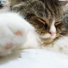 Sleepy Head Cat
