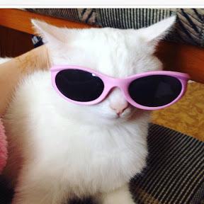 Крошка кошка
