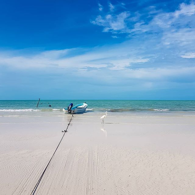 Where is your paradise? . . . . . #thewanderoustraveler #passionpassport #beautifuldestinations #lonelyplanet #natgeotravel #earthpix #amazingearth #sheisnotlost #nomadlife #backpackergirls #optoutside #doyoutravel #exploretheworld #holbox #islaholbox #quintanaroo #travelyoga #islandlife #beachbum #vitaminsea #remotebeach #remoteisland #beachvibes #mexicotravel #discovermexico #mexicodesconocido #paradise #paradisebeach
