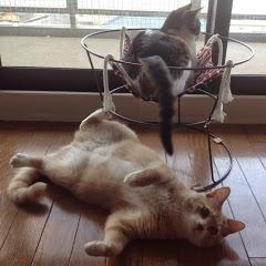 ♀猫こむぎ&♂猫だいず
