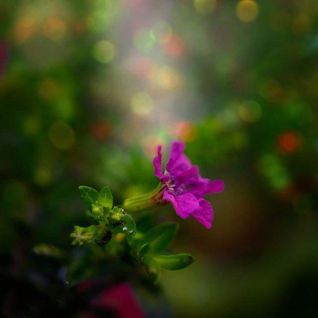 ♧ The World is but like a Canvas to our Imagination. -Henry David Thoreau . . . ¤▪︎¤▪︎¤▪︎ . جهان شبیه یک بوم نقاشیست برای تخیل ما. هنری دیوید ترو . ¤▪︎¤▪︎¤▪︎ . 💜💛💚💙❤🧡 . . ●○●○●○ . EXIF:  f/5,6 ▪︎ 1/100 ▪︎ ISO 1200 Focal Lenght: 70 mm  Lens: Sony FE 28-70 Camera: Sony alpha 7 . ●○●○●○ . . . .  #srs_nature #ashkankankash  #ig_nature_naturally  #bestnatureshots  #natureelite #natureloverforlife #nature_seekers #nature_perfect_day #nature_specialist #nature_seekers