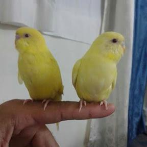 عالم طيور الحب