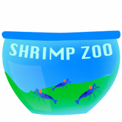 Shrimp Zoo