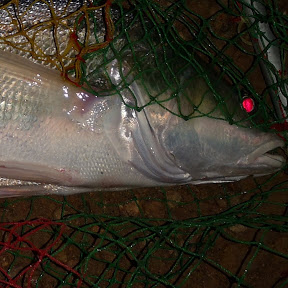 River Fishing Thailand