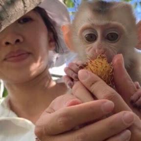 Monkey Mon