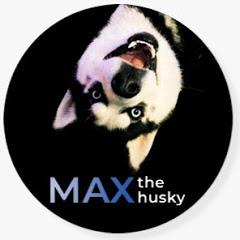 Max The Husky