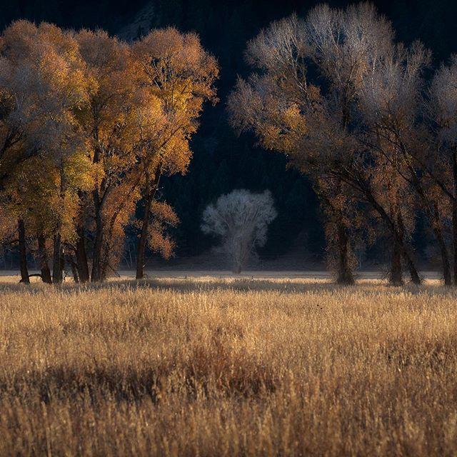 -in between dreams- 📷 @nikonusa d850 Lens: @tamronusa 70-200 2.8 G2  Tripod: @siruiimaging w2204 #ig_shotz_trees #raw_alltrees #splendid_earth #splendid_shotz #jaw_dropping_shots #tree_brillance #withmytamron #70200G2 #NikonNoFilter #nikond850 #landscapephotography #52weeksofnature #igrefined