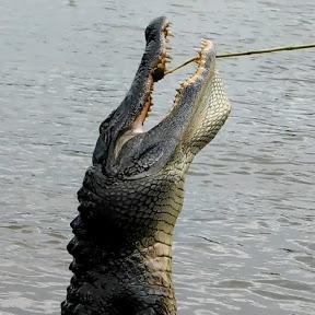 Mississippi Wildlife