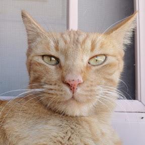 Neuroscientist Cat