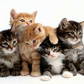 عالم القطط