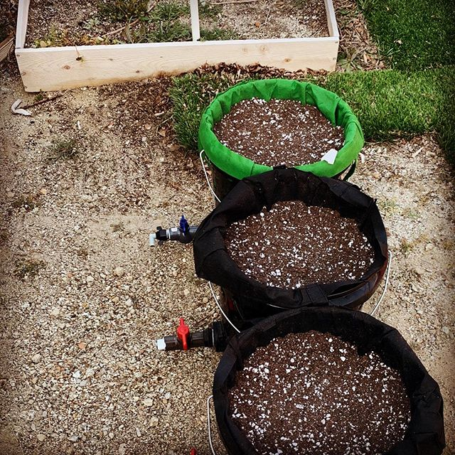 A lot of prepping is being prepared and self reliant.  So growing food is part of that.  These buckets will jalapeño peppers in them and the box will have tomatoes.  #jalapeno #tomato #bucket #5gallonbucket #broparedness #beprepared #urbangardener #amateurfarmer #prepper #prepping #foodprepping