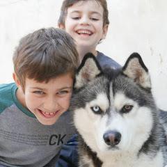 Ryker the Husky Dog