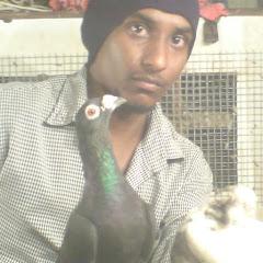 Sagay Pigeons and carp fishing