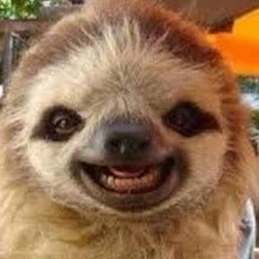 Slow Mo Sloth