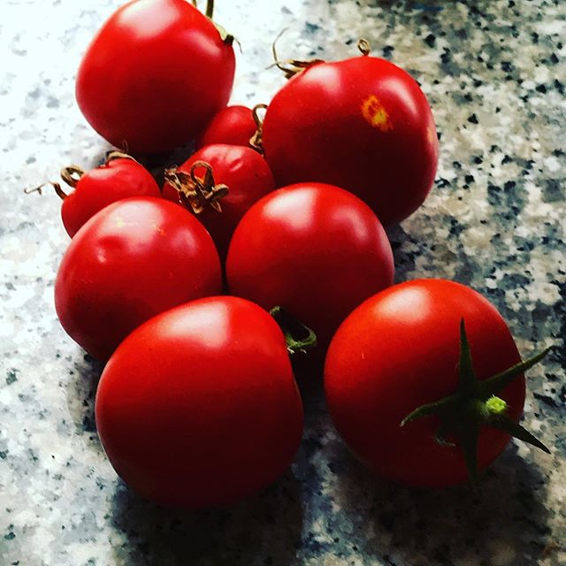Homegrown tomatoes 🍅 I can't take the credit for them my daughter grew them #clevergirl #homegrown #freshtomatoes #tastytoms