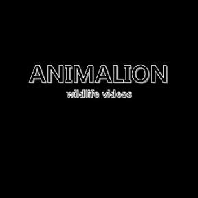 ANIMALION